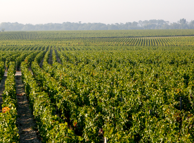 <p>The Clerc Milon vineyard is planted with the typical varieties of the region: cabernet-sauvignon, merlot, cabernet franc, petit verdot and carmenère.</p>